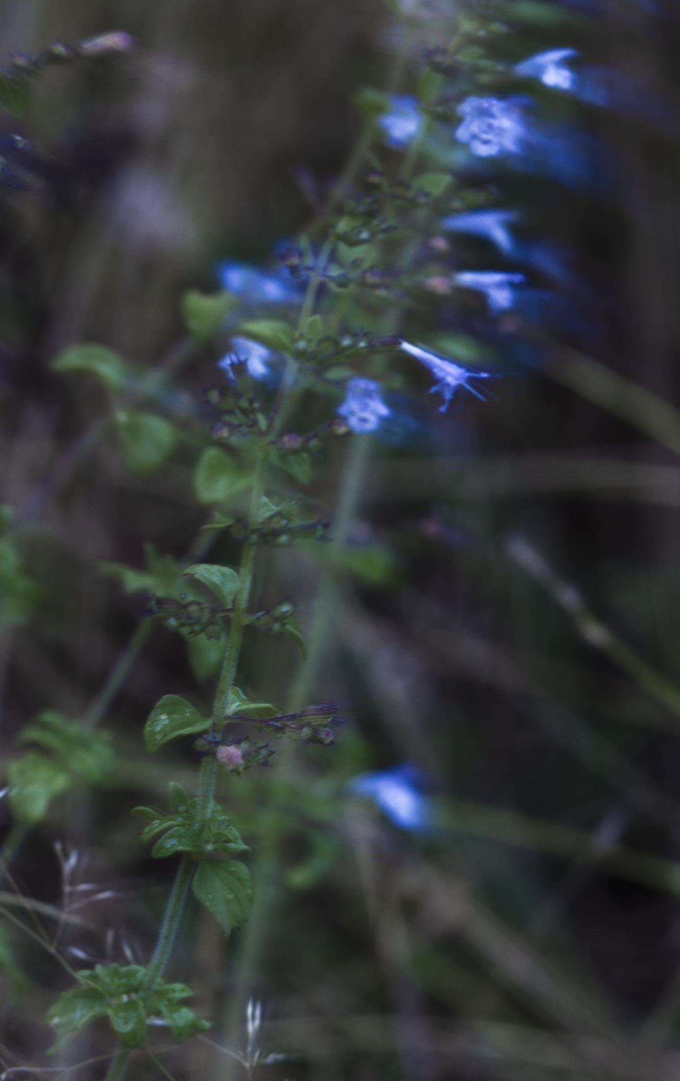 Blume Farbdia ca. 60x38cm, 2014