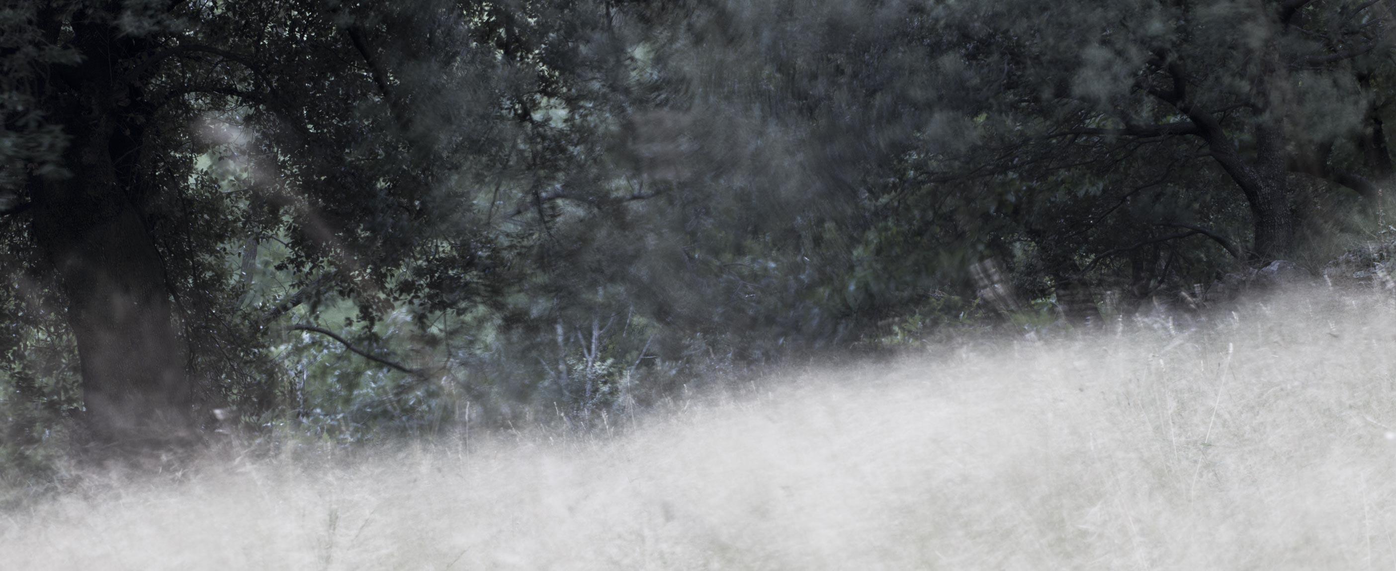 Wiese mit Bäumen Farbdia ca. 147x60cm, 2014